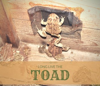 An Ode to the Toad